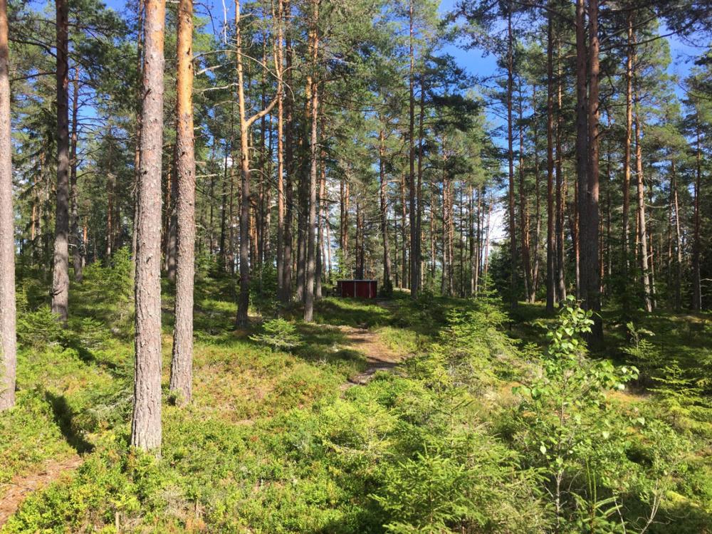 waldbaden-yoga-ruhe-natur-hot-tub-entspannung-wald-schweden-foxen-see-naturreisen-natururlaub